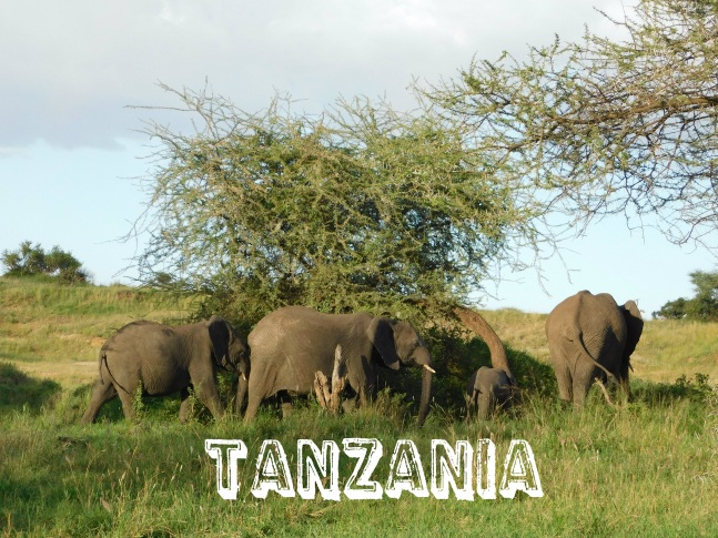 tanzania category pic