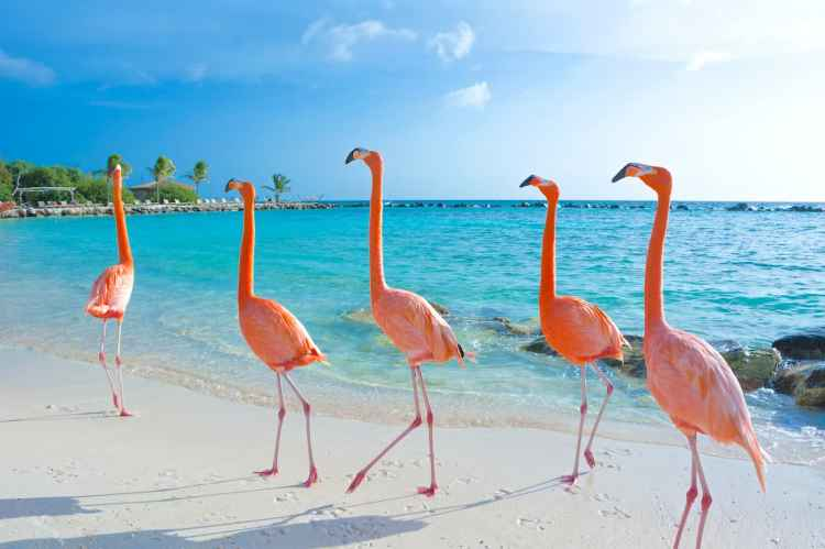 Flamingo-Beach-Aruba